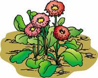 花とお日さま