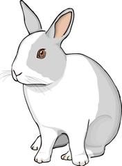 ウサギのツノ